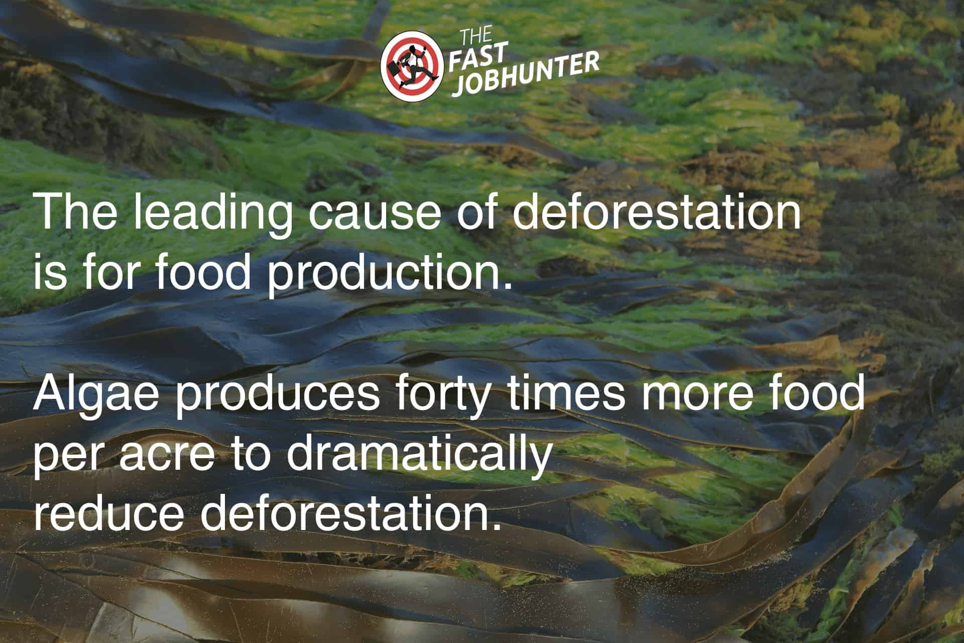 The Leading Cause of Deforastation is Food Production